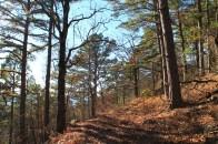 Ouachita Trail 02: Pics of Pashubbe TH to Kiamichi River TH (Wilton Mtn.) (34.3 - 39.2) photo