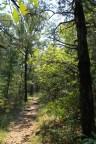 Lake Leatherwood: Beacham Trail - 3mi photo