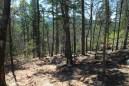 Robbers Cave Nature Trail -- .5mi photo