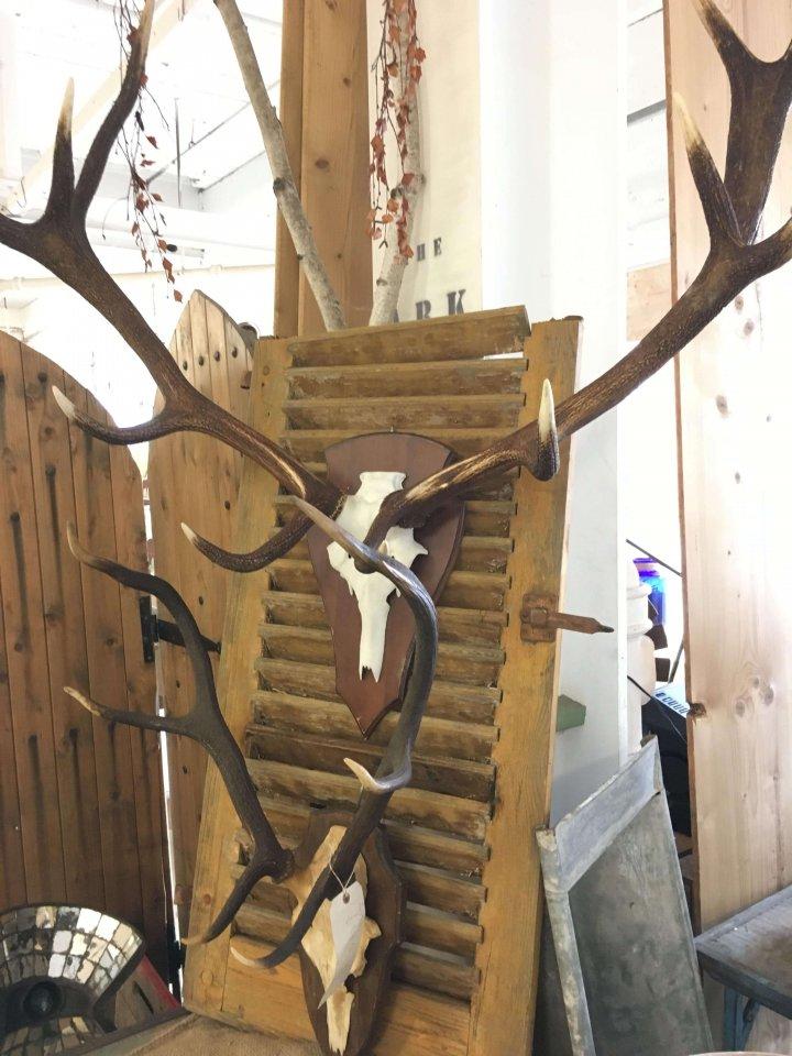 Vintage deer antlers from Europe.