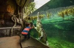 crocodile child