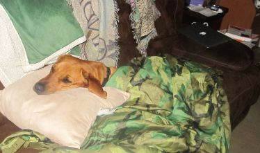 comfy-duke