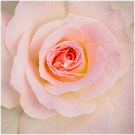 Gentle Beauty - Patty Colabuono
