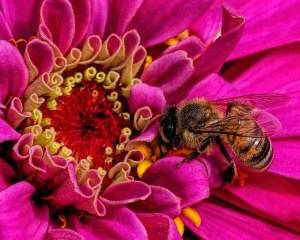 Ken Olsen - Busy Bee