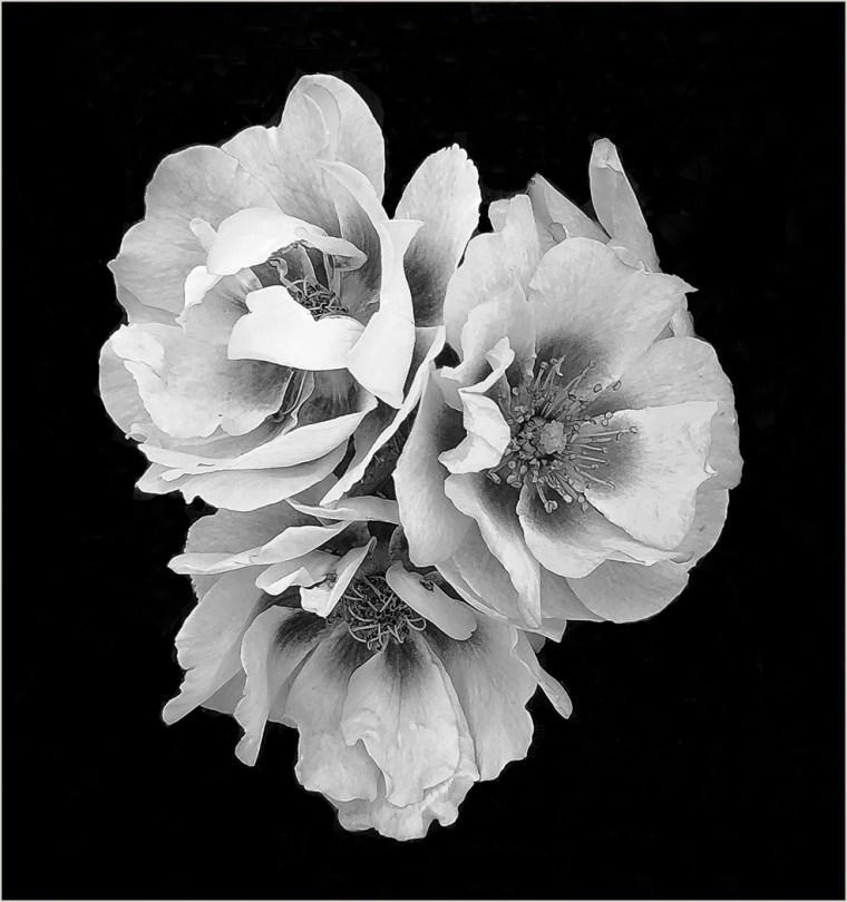 Rich Hassman - 3 Flowers