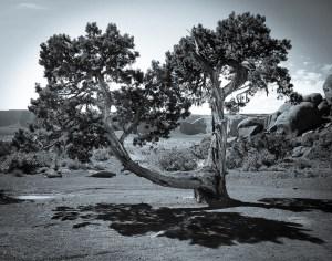 """Mike Garber - """"Desert Cyprus"""""""