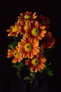 Steve-Seburn_Halloween-Flowers
