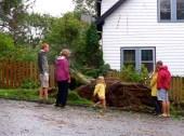 Families out for a walk stop to look at a downed tree on Eastern Avenue. August 28, 2011.