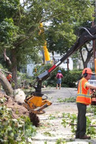 Tree crews and the Arlington Department of Public works clears Adams Street after a damaging microburst. July 19, 2012.