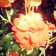 una florecilla