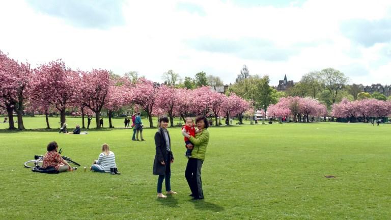 Meadows, qué ver en Edimburgo