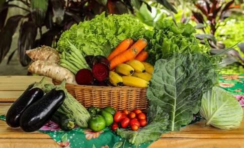 Monte suas Cesta Organica!
