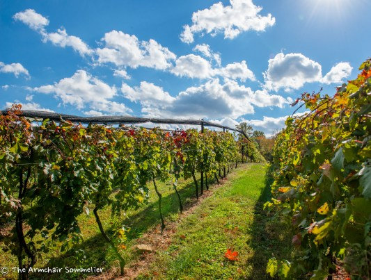 Vineyard View #2