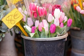 Paris Flower Market Tulips