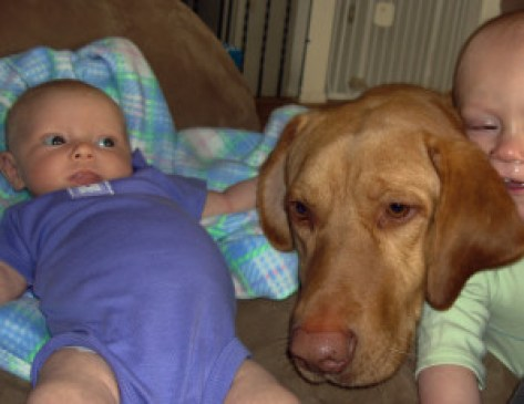 Young Labrador with baby and toddler