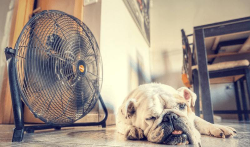 ventilador-calor-png_1305449671