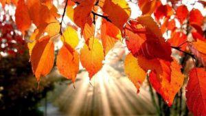 otoño-Armstrong-y-Region-