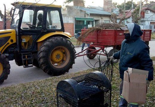 Cañada de Gómez. Continúan tareas de higiene urbana.