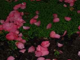 Jardin Albert Kahn (2)