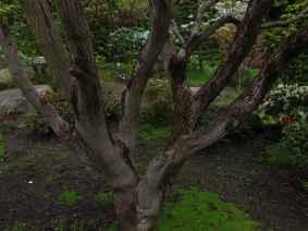 Jardin Albert Kahn (6)