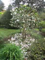 Jardin Albert Kahn (71)