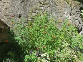 Jardin des fontaines pétrifiantes (24)