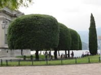 Love the sculpted trees in Europe