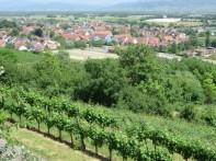 Overlooking the town of Munzingen
