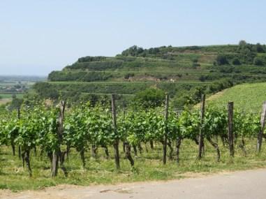 Vineyard tiers
