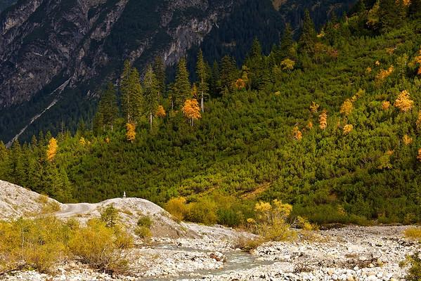 Fichten (Picea abies), Bergkiefern (Pinus mugo) und Birken (Betula) - Angerletal , Tirol, Österreich