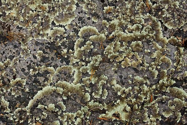 Fels im Sånfjället Nationalpark, Härjedalen, Jämtland - Schweden