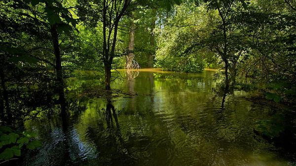 Überfluteter Rheinwald