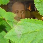 Goethe-en-zevenblad-1920x420