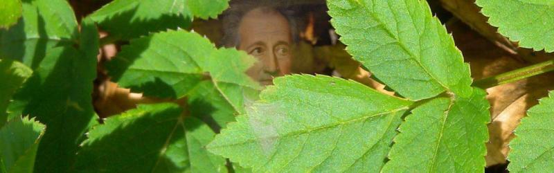 2005: Het onkruid van Goethe