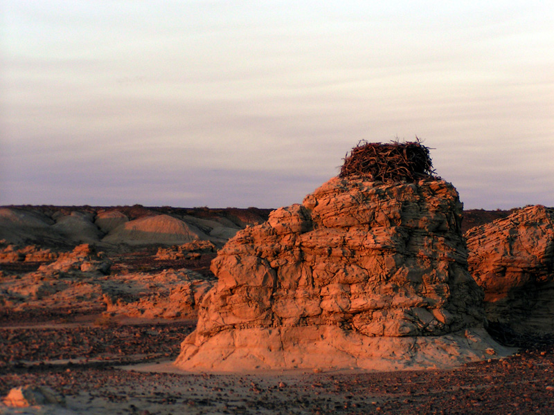 A raptors nest sits atop a formation