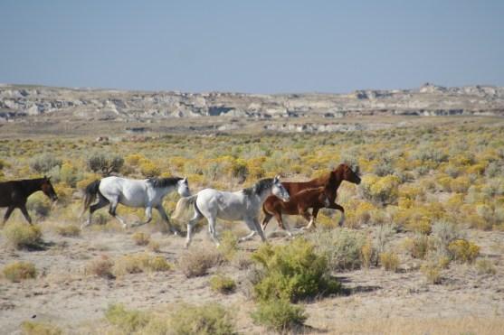 Feral horse herd in Adobetown