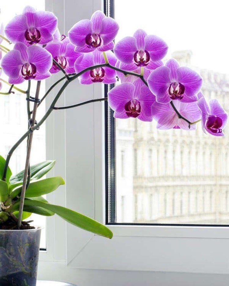 Plantas para un espacio con buen feng shui