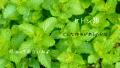 【芳香成分類】ケトン類を多く含む精油と作用