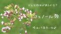 【芳香成分類】フェノール類を多く含む精油と作用