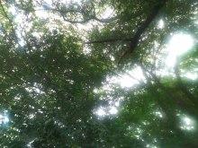 浦和発♪アロマでオンリーワンの幸せへと導く自宅サロン-ジリミリの空.jpg