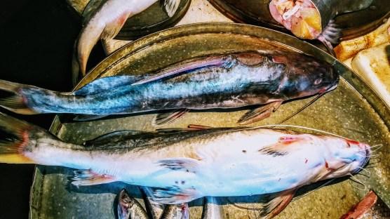 Ary fish