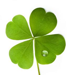 Four Leaf Clover Aroma Trivia Aromatherapy Contessa