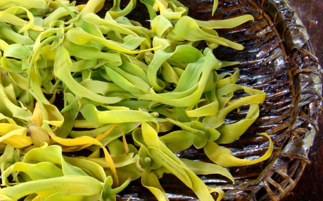 Aceite esencial de ylang-ylang  – cananga odorata