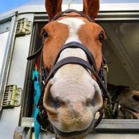 La aromaterapia alivia el estrés en los caballos