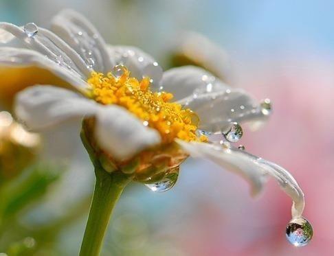Bendita agua!!!: el agua de la prosperidad