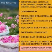 Aceite esencial de rosa -rosa  damascena