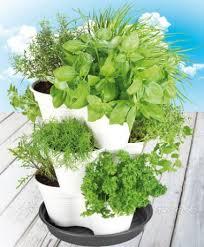 giardino piante aromatiche 1