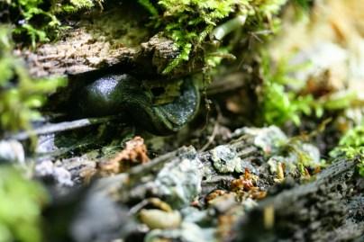 micro habitats pour les gastéropodes