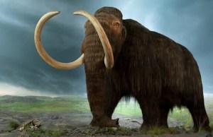 Une mammouth en images de synthèse.