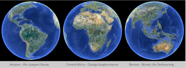 3 zones représentatives de la forêt équatoriale primitive